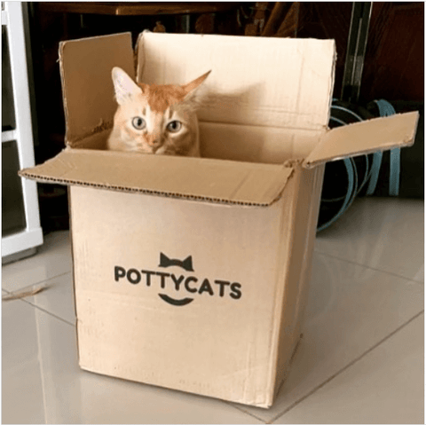 A cute ginger cat playing hide and seek in Pottycats cardboard box