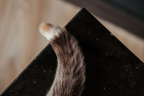 A cat wagging it's tail