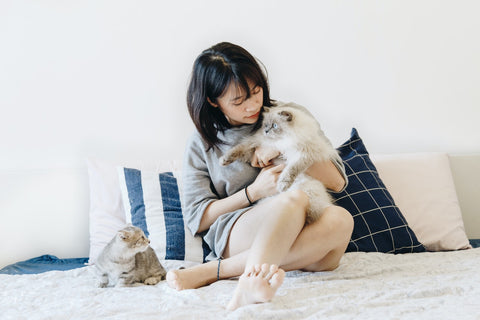 A girl holding a ragdoll cat and a mixed breed cat looking up from the couch