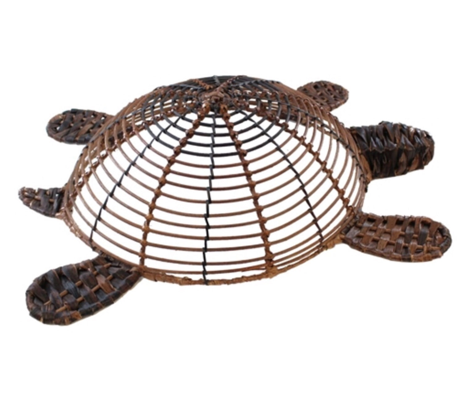Brown Bacbac Turtle