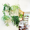 Wally Eco Mint Wall Planter