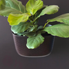 Wally Eco Espresso Wall Planter