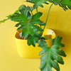 Wally Eco Sunflower Wall Planter
