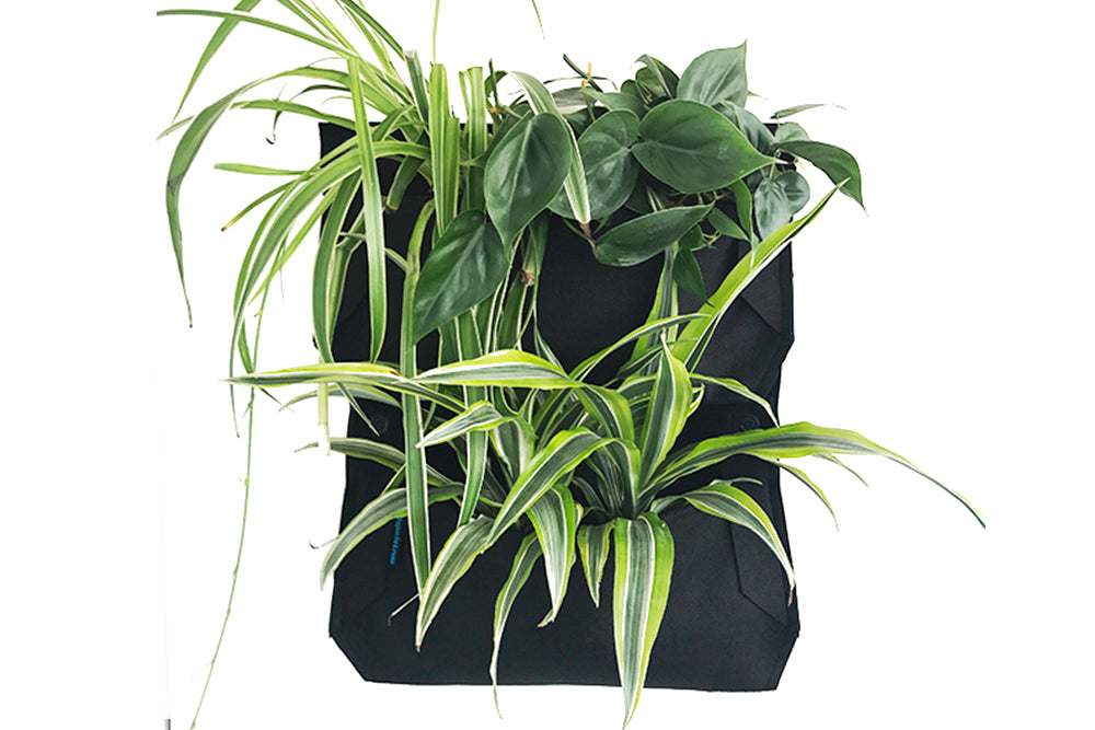 Wally Pro Jr. 1 Pocket Wall Planter