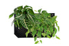 Wally Pro 1 Black Wall Planter Pocket