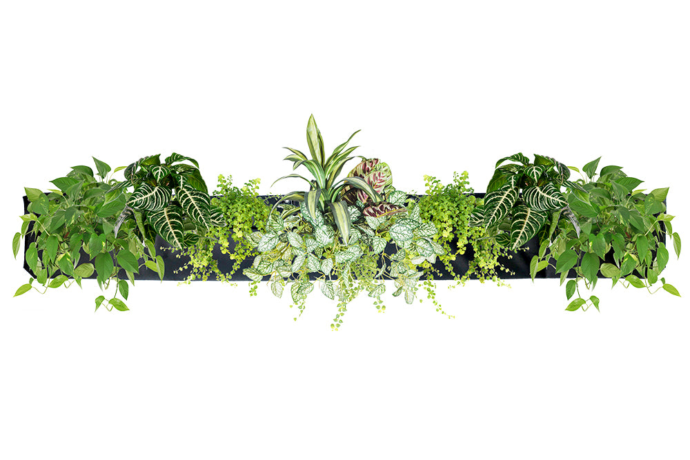 Wally Pro 5 Black Wall Planter Pocket