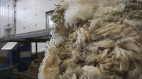 The Anatomy of Wool