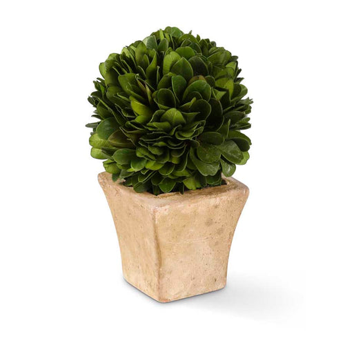 Preserved Mini Potted Boxwoods, Set of 6
