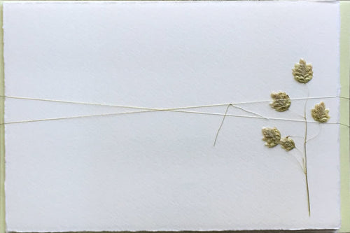Soolip Pressed Flower Note Cards- Quaking Grass, Set of 6