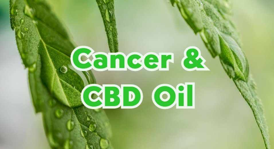 CBD Oil May Have Contributed to Cancer Patient's Shrinking Tumors