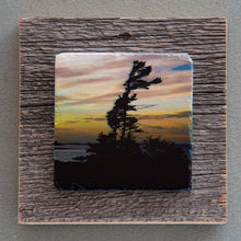 Load image into Gallery viewer, Windswept Pine - On Barn Board 0011