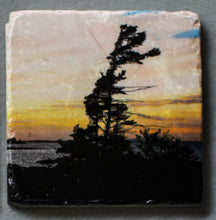 Load image into Gallery viewer, Windswept Pine - Coaster #0011