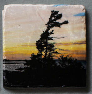 Windswept Pine - Coaster #0011