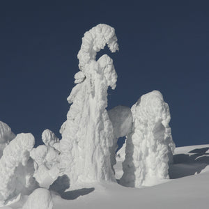 Snow Ghosts - Coasters #2194