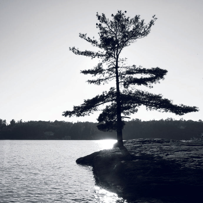 B&W  Muskoka Pine Point - Coasters #5142