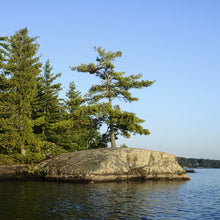 Load image into Gallery viewer, Standing Tall in Muskoka - Trivet #9970
