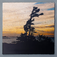 Load image into Gallery viewer, Windswept Pine