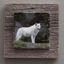 Load image into Gallery viewer, White Wolf - On Barn Board 2942