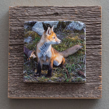 Load image into Gallery viewer, Ears Up - On Barn Board 8685