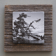 Load image into Gallery viewer, Windswept Pine B&W - On Barn Board 0846