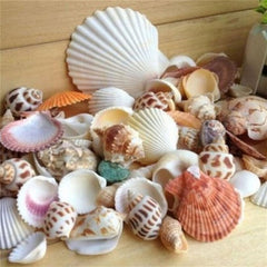 100g Fashion Jewelry Decoration Beach Fashion Seashells Sea Shells for DIY Craft Decor
