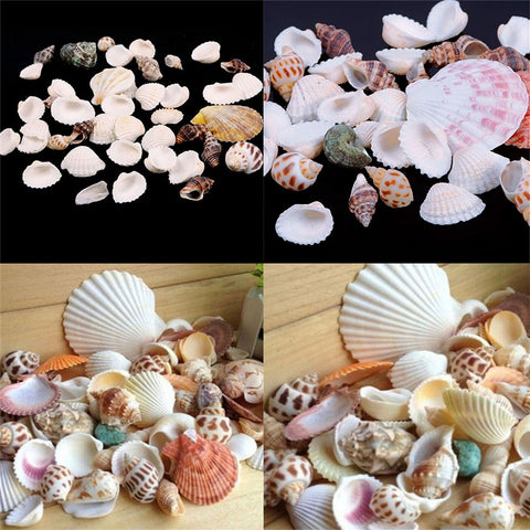 100g Package of Fashion Jewelry Decoration Beach Seashells Sea Shells for DIY Craft Decor