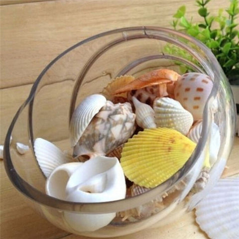 Jewelry Decoration 100g Package  Beach Seashells for DIY Craft Home or Wedding Decor