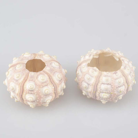 Sea Urchin 2PCS Set for Home Party Wedding Decor
