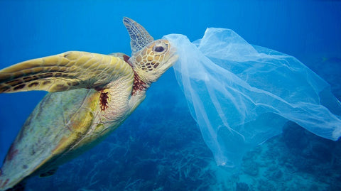 sea turtle plastic pollution