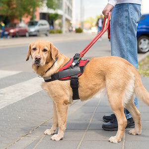 All Creatures Great and Small: Rules About Assistance Animals (PMC8) - ONLINE ANYTIME