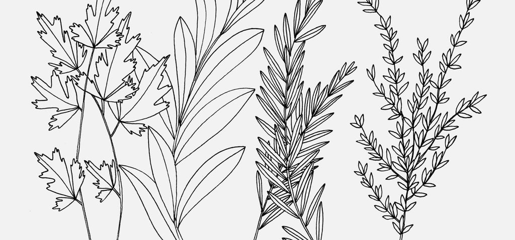 Spring Has Sprung | Free Coloring Page