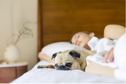 Detox Your Sleep: 7 Toxic Chemicals in Your Bedding & Safer Alternatives