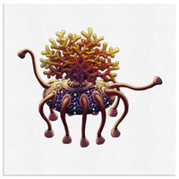 Woodfordia Critters: Coral Canvas