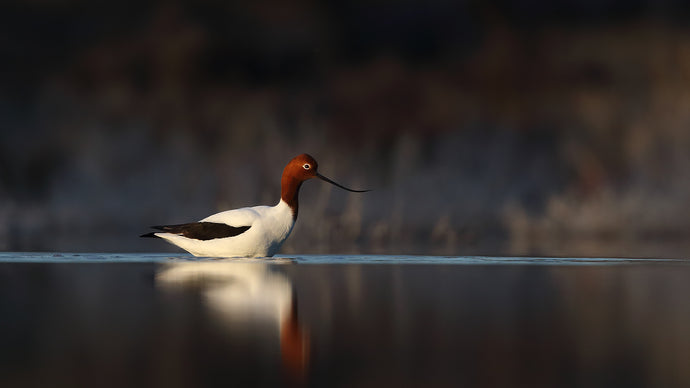 Top Tips for Better Bird Photography
