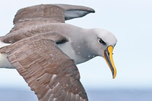 The Dos and Don'ts of Photographing Pelagic Birds