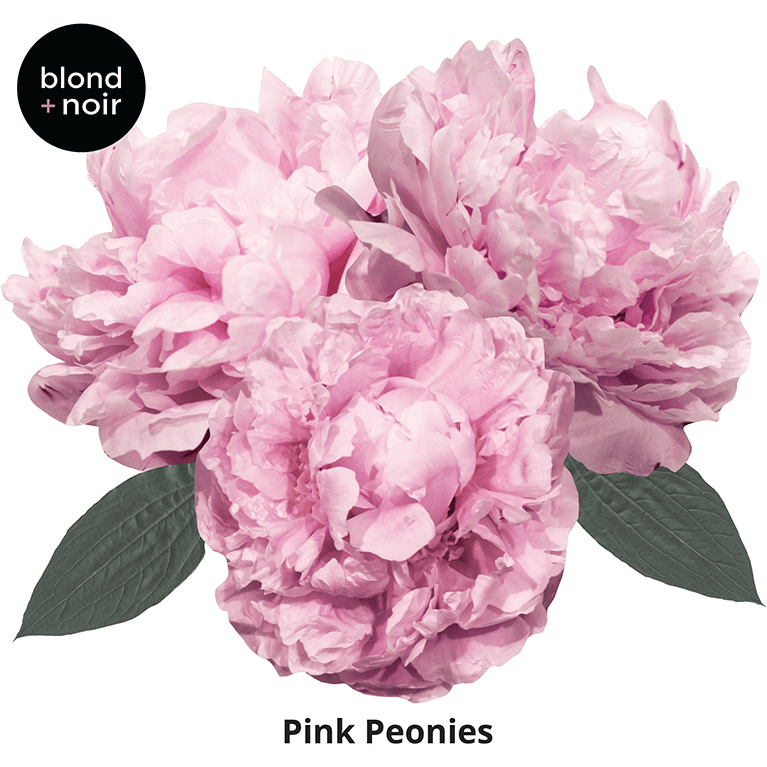Peonies medium half - wall decals