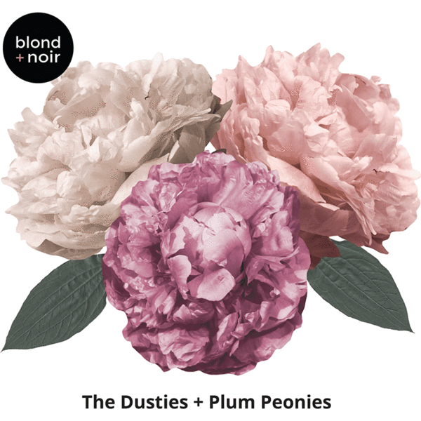 Dusty + Plum Peonies, large full - wall decals IN STOCK