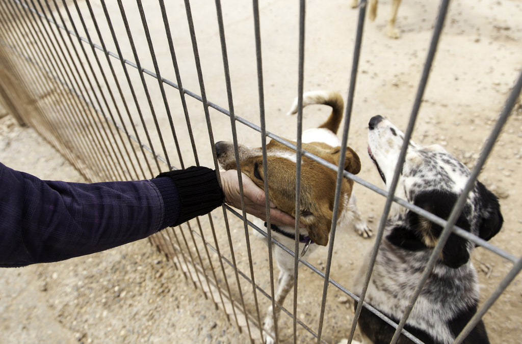 Dens & Kennels photo of employee petting a dog in a Rhino kennel