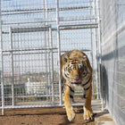 Rhino Exotic Animal Enclosure 18'W x 18'D x 8'H Exotic Animal Cage