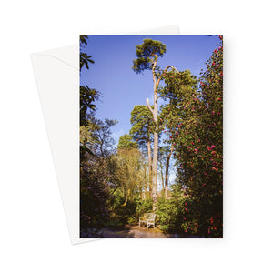 'A Place in the Sun' -  Greeting Card