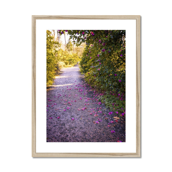 Camellia Trail Framed & Mounted Print