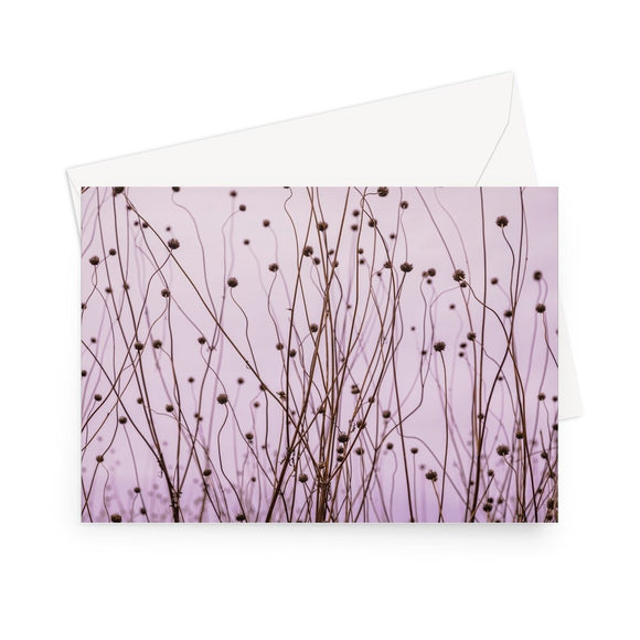 'Seeds of Change' - High quality greeting card featuring my photograph of dormant Verbena (Verbena Bonariensis) in the Glasshouse Landscape at RHS Wisley. Printed on high-quality 330gsm Fedrigoni card. Envelope supplied.