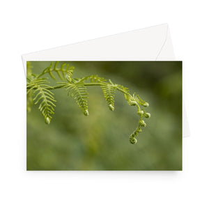 'Frond of a Frond' - High quality greeting card featuring my macro photograph of bracken unfurling. Printed on high-quality 330gsm Fedrigoni card. Envelope supplied.