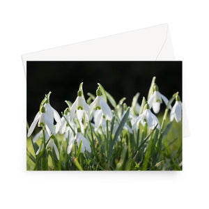 'Snowdrops' - High quality greeting card featuring my close-up photograph of snowdrops. Printed on high-quality 330gsm Fedrigoni card. Envelope supplied.