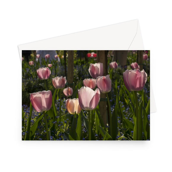 'Pink Tulips at Giverny' - High quality greeting card featuring my photograph of a host of pink tulips in Monet's famous garden at Giverny. Printed on high-quality 330gsm Fedrigoni card. Envelope supplied.