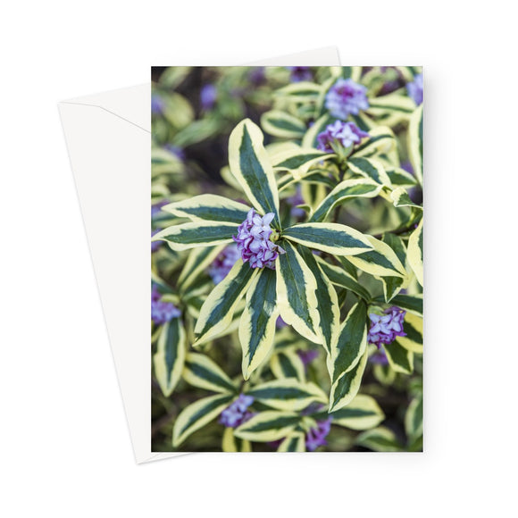 'Heaven Scent' -  Greeting Card