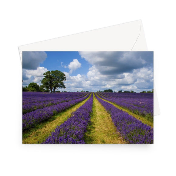'Lavender and Big English Sky' - High quality greeting card featuring my close up photograph of a lavender crop under a sky of blue with huge, billowing clouds. Printed on high-quality 330gsm Fedrigoni card. Envelope supplied.
