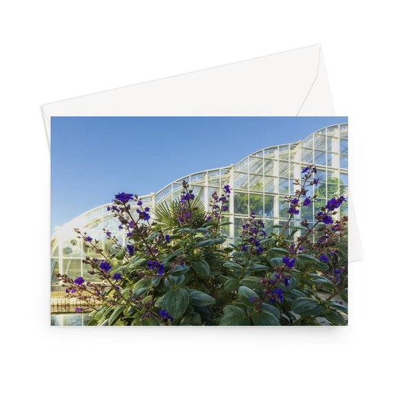 'Princess Flower and Glass Palace' - High quality greeting card featuring my photograph of the spectacular 'Princess Flower' (Tibouchina Urvilleana) plant outside the magnificent Glasshouse at RHS Wisley. Printed on high-quality 330gsm Fedrigoni card. Envelope supplied.