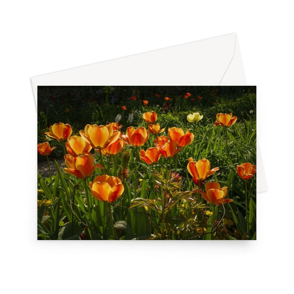 'Orange Tulips at Giverny' - High quality greeting card featuring my photograph of a host of vivid orange tulips in Monet's famous garden at Giverny. Printed on high-quality 330gsm Fedrigoni card. Envelope supplied.
