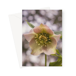 'Hello Hellebore!' -  Greeting Card
